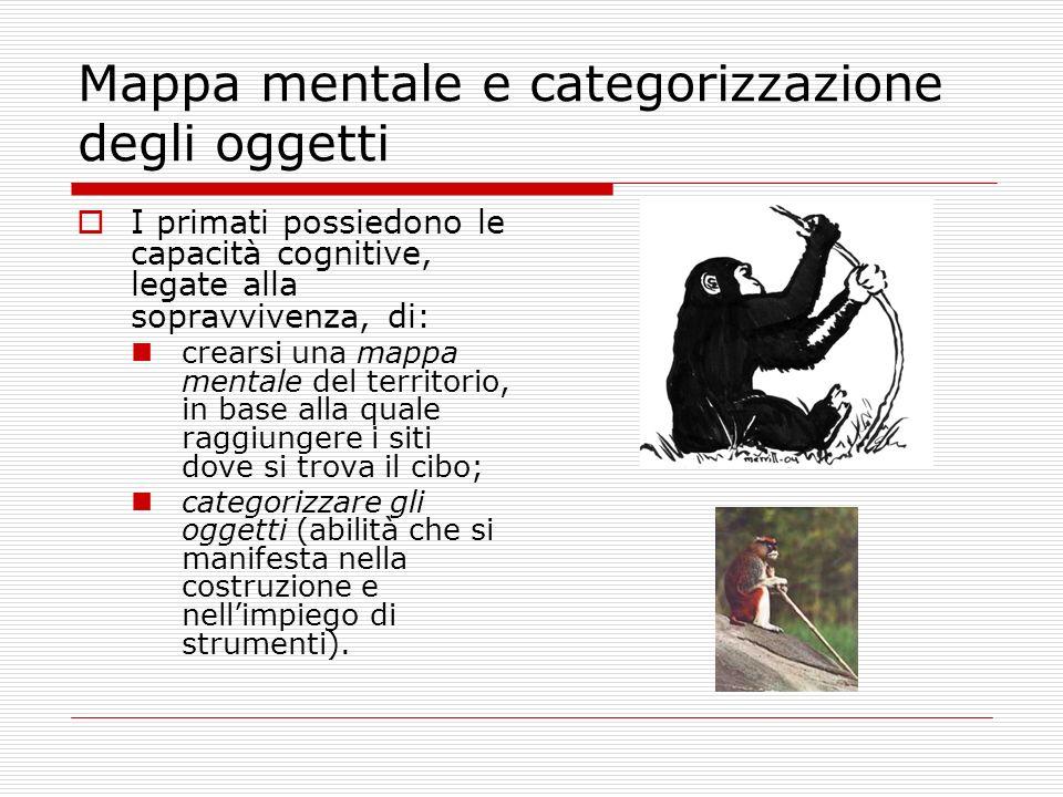 Mappa mentale e categorizzazione degli oggetti I primati possiedono le capacità cognitive, legate alla sopravvivenza, di: crearsi una mappa mentale de