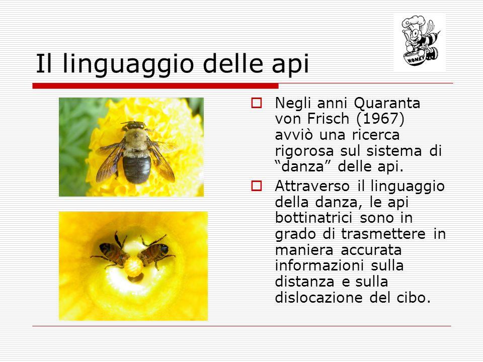 Il linguaggio delle api Negli anni Quaranta von Frisch (1967) avviò una ricerca rigorosa sul sistema di danza delle api. Attraverso il linguaggio dell