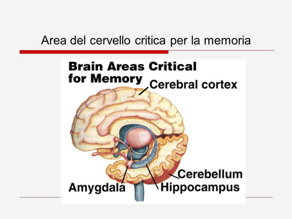 Area del cervello critica per la memoria