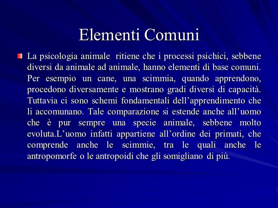 Elementi Comuni La psicologia animale ritiene che i processi psichici, sebbene diversi da animale ad animale, hanno elementi di base comuni. Per esemp