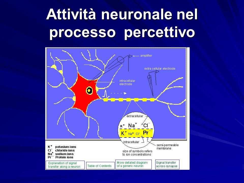 Attività neuronale nel processo percettivo