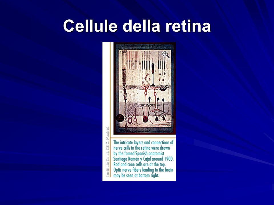 Cellule della retina