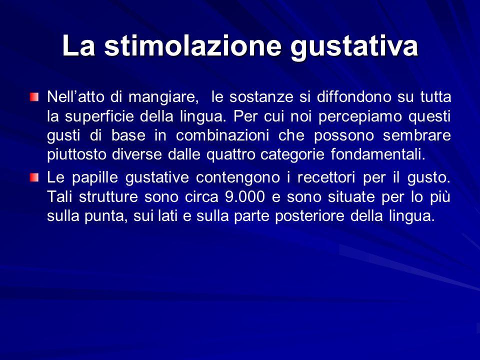 La stimolazione gustativa Nellatto di mangiare, le sostanze si diffondono su tutta la superficie della lingua. Per cui noi percepiamo questi gusti di