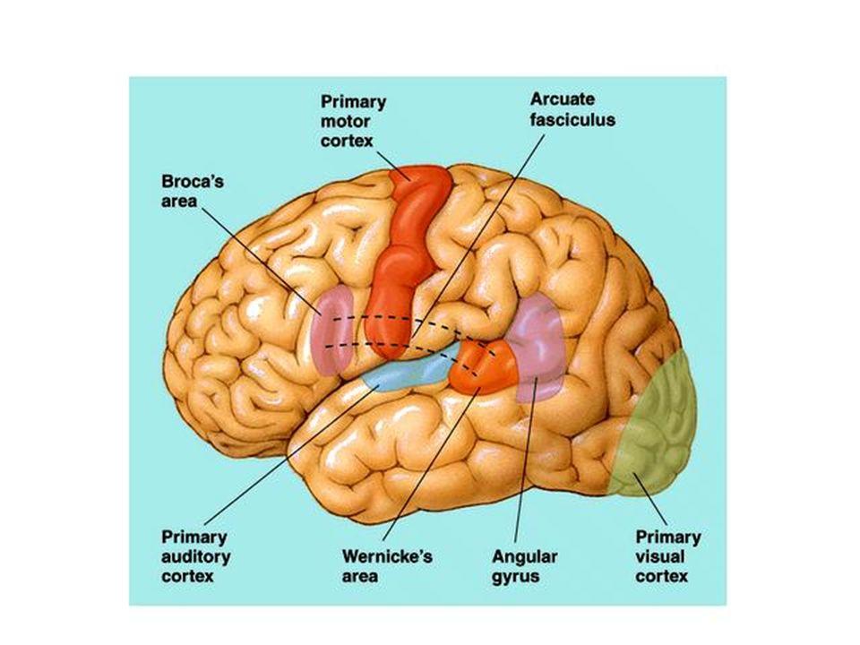 Teoria della ricerca del significato Sono descritti nove tipi diversi di inferenze: 1.