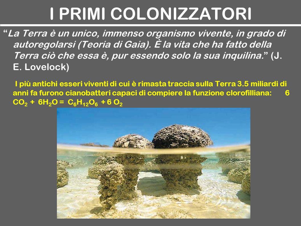 I PRIMI COLONIZZATORI La Terra è un unico, immenso organismo vivente, in grado di autoregolarsi (Teoria di Gaia). È la vita che ha fatto della Terra c