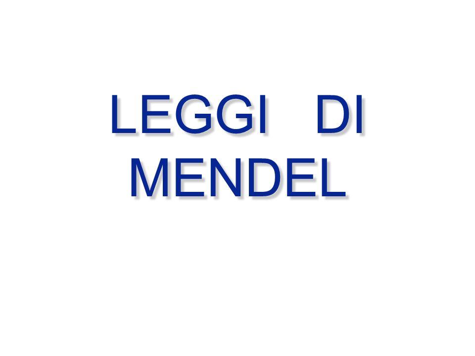 SEGREGAZIONE ED ASSORTIMENTO Durante la segregazione di COPPIE DI ALLELI i caratteri PATERNI e MATERNI si distribuiscono in modo casuale nei gameti UN TIPO di UN ALLELE x GAMETE gli alleli paterni e materni DELLO STESSO TIPO si distribuiscono in modo casuale nei gameti # LEGGE DI SEGREGAZIONE DI MENDEL # LEGGE DELLASSORTIMENTO INDIPENDENTE P Gamete 1 Gamete 2