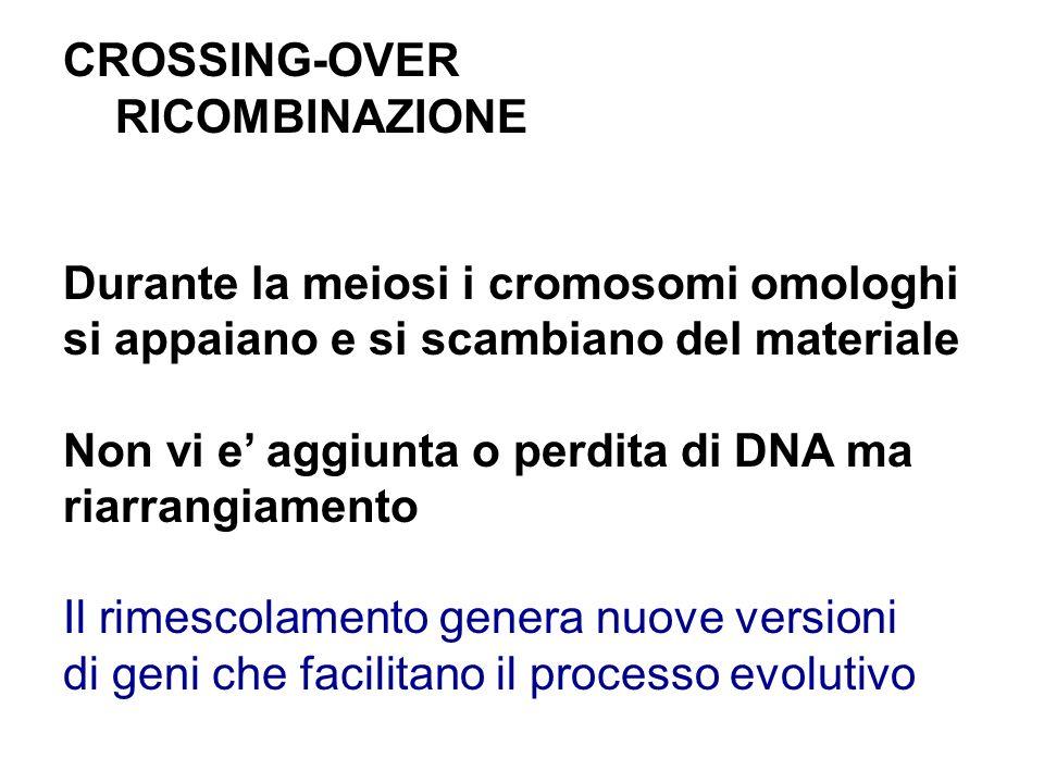 RICOMBINAZIONE Durante la meiosi i cromosomi omologhi si appaiano e si scambiano del materiale Non vi e aggiunta o perdita di DNA ma riarrangiamento I