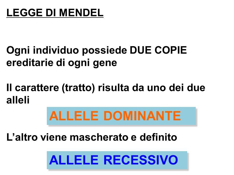 LEGGE DI MENDEL Ogni individuo possiede DUE COPIE ereditarie di ogni gene Il carattere (tratto) risulta da uno dei due alleli Laltro viene mascherato