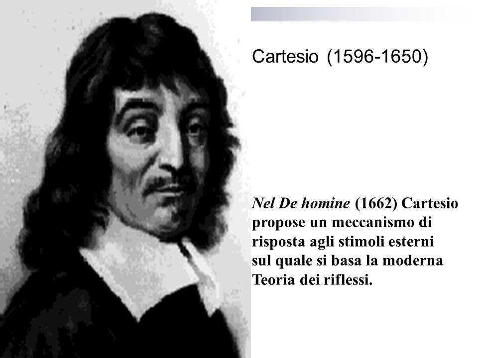 Cartesio (1596-1650) Nel De homine (1662) Cartesio propose un meccanismo di risposta agli stimoli esterni sul quale si basa la moderna Teoria dei riflessi.