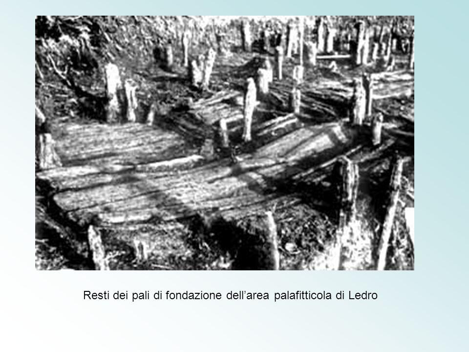 Resti dei pali di fondazione dellarea palafitticola di Ledro