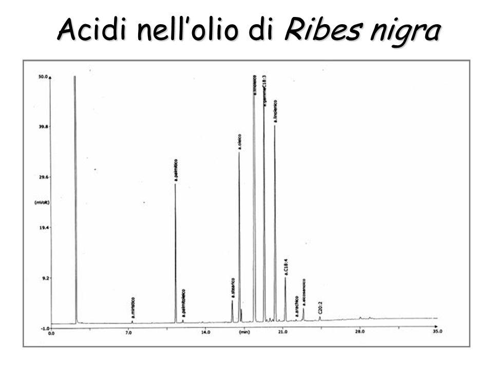 Acidi nellolio di Ribes nigra