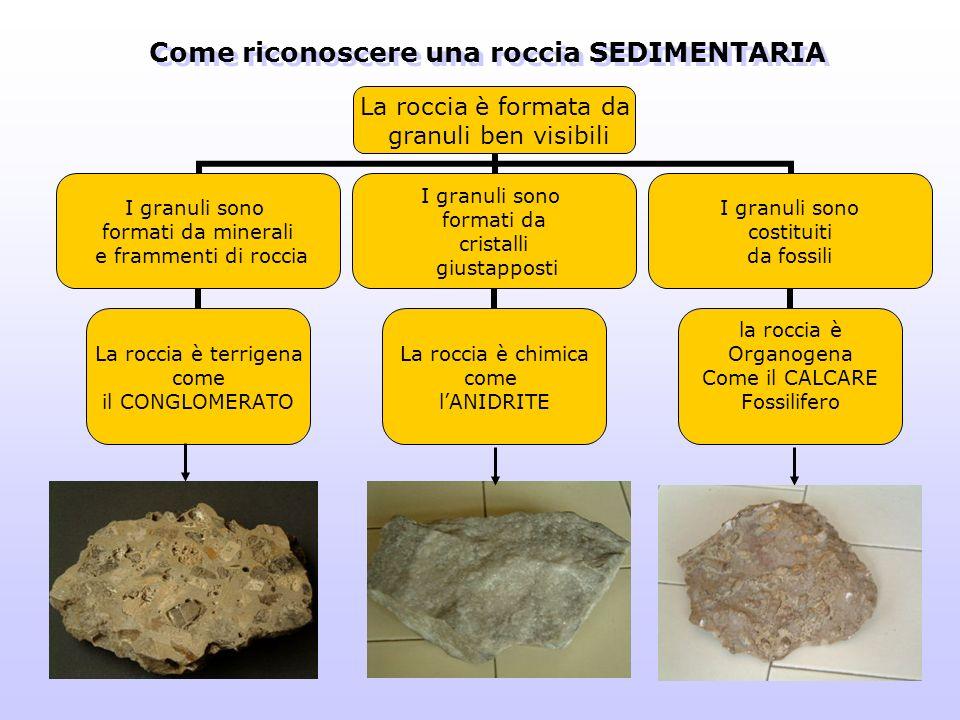 Come riconoscere una roccia SEDIMENTARIA La roccia è formata da granuli ben visibili I granuli sono formati da minerali e frammenti di roccia La rocci