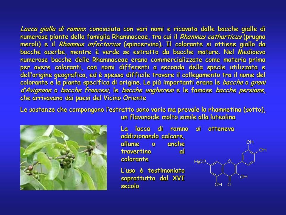 Lacca gialla di ramno: conosciuta con vari nomi e ricavata dalle bacche gialle di numerose piante della famiglia Rhamnaceae, tra cui il Rhamnus catharticus (prugna meroli) e il Rhamnus infectorius (spincervino).