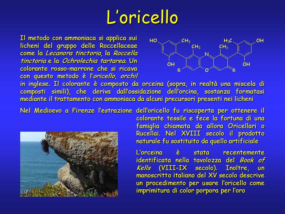 Loricello Il metodo con ammoniaca si applica sui licheni del gruppo delle Roccellaceae come la Lecanora tinctoria, la Roccella tinctoria e la Ochrolechia tartarea.