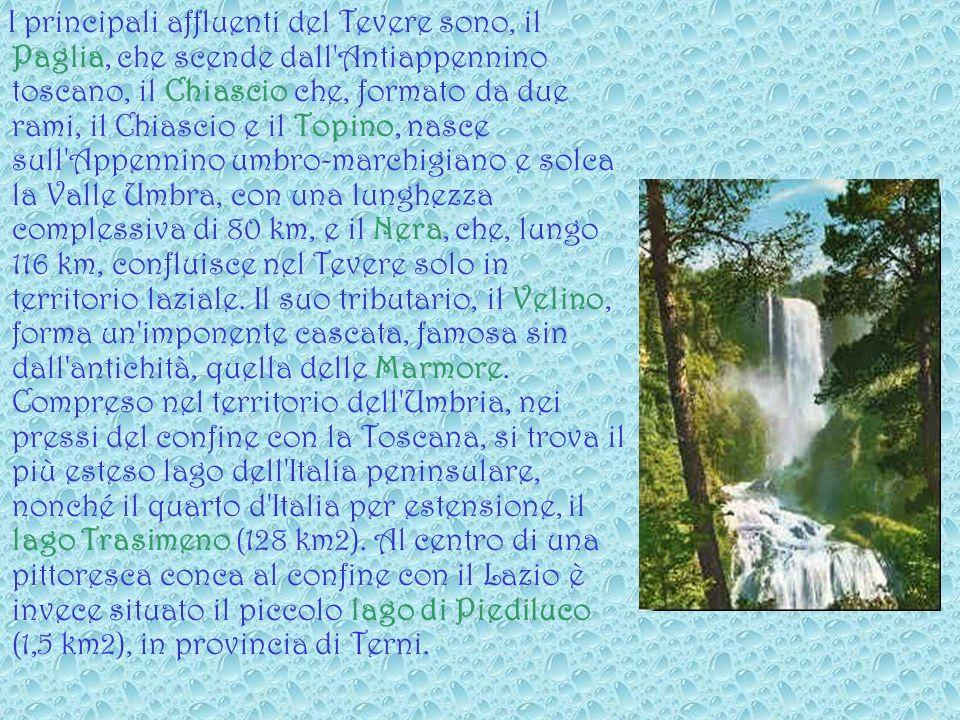 I principali affluenti del Tevere sono, il Paglia, che scende dall Antiappennino toscano, il Chiascio che, formato da due rami, il Chiascio e il Topino, nasce sull Appennino umbro-marchigiano e solca la Valle Umbra, con una lunghezza complessiva di 80 km, e il Nera, che, lungo 116 km, confluisce nel Tevere solo in territorio laziale.