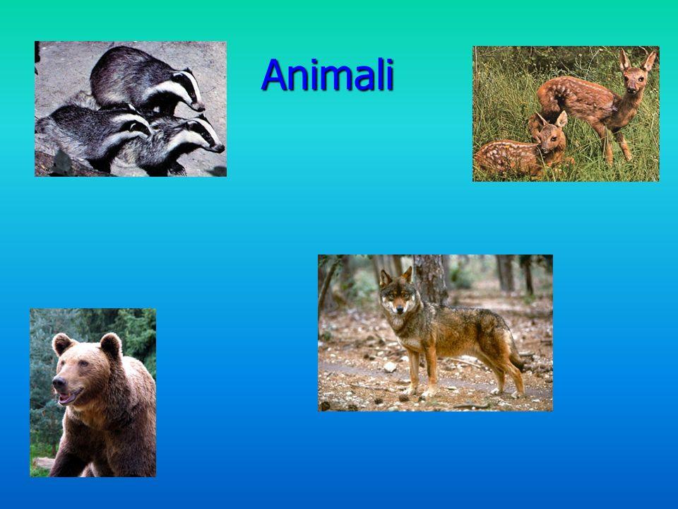Animali Animali