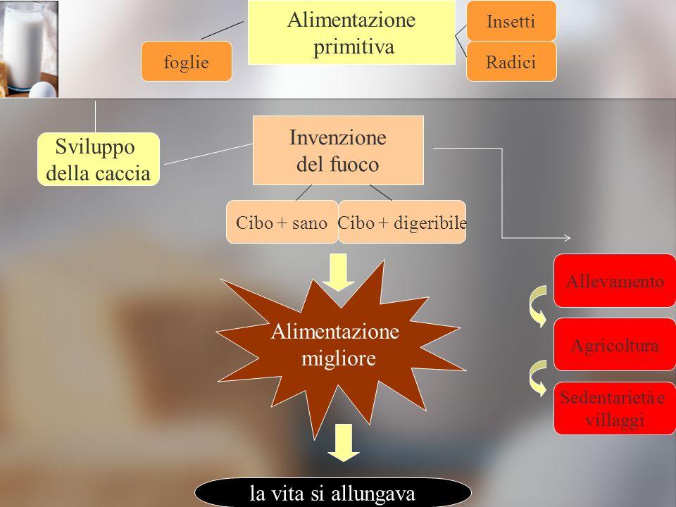 Alimentazione primitiva Insetti foglieRadici Sviluppo della caccia Invenzione del fuoco Cibo + sanoCibo + digeribile Allevamento Agricoltura Sedentari