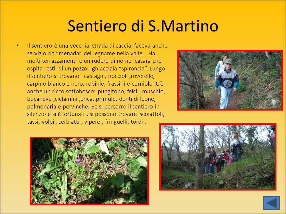 Sentiero di S.Martino Il sentiero è una vecchia strada di caccia, faceva anche servizio da menada del legname nella valle.