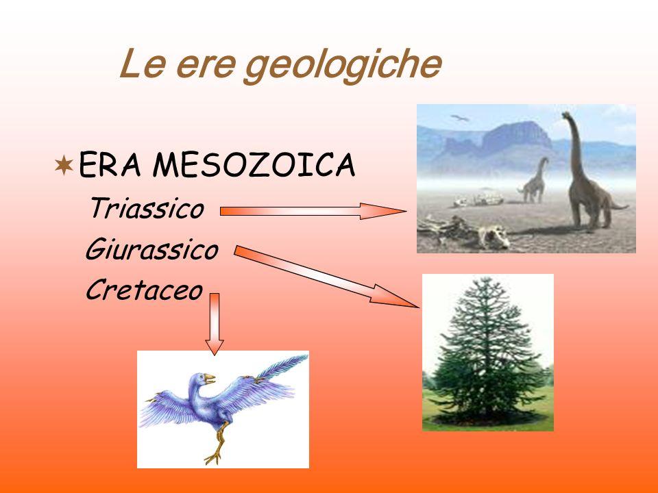 Le ere geologiche ERA PALEOZOICA Cambriano Ordoviciano Siluriano Devoniano Carbonifero Permiano