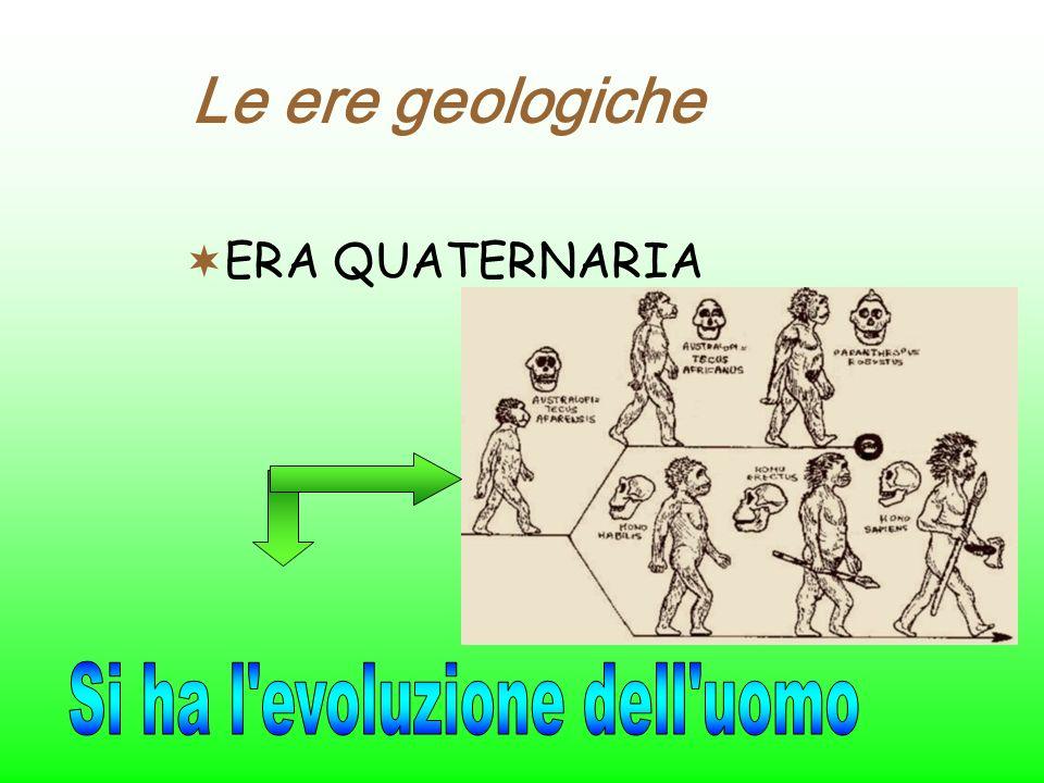 Le ere geologiche ERA CENOZOICA Paleocene Eocene Oligocene Miocene Pliocene