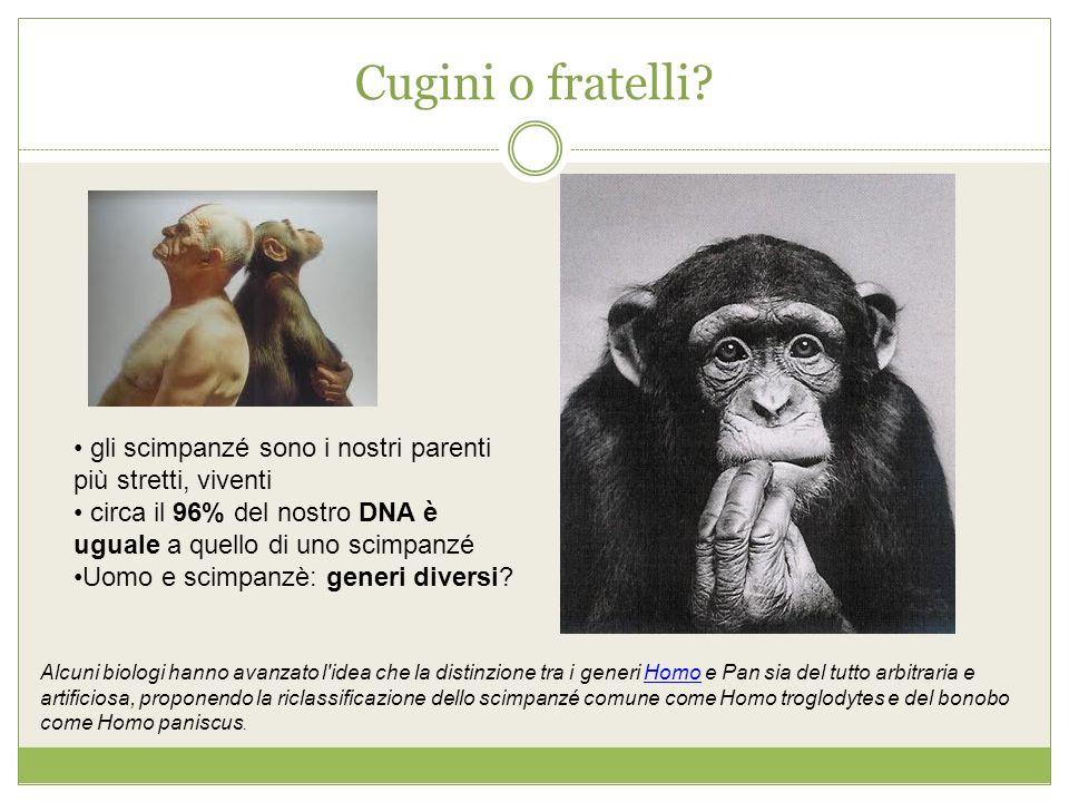 Cugini o fratelli? gli scimpanzé sono i nostri parenti più stretti, viventi circa il 96% del nostro DNA è uguale a quello di uno scimpanzé Uomo e scim
