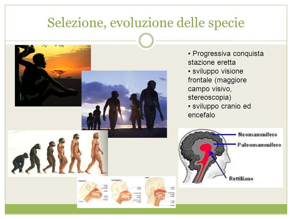 Selezione, evoluzione delle specie Progressiva conquista stazione eretta sviluppo visione frontale (maggiore campo visivo, stereoscopia) sviluppo cran