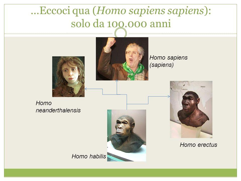 …Eccoci qua (Homo sapiens sapiens): solo da 100.000 anni Homo habilis Homo erectus Homo neanderthalensis Homo sapiens (sapiens)