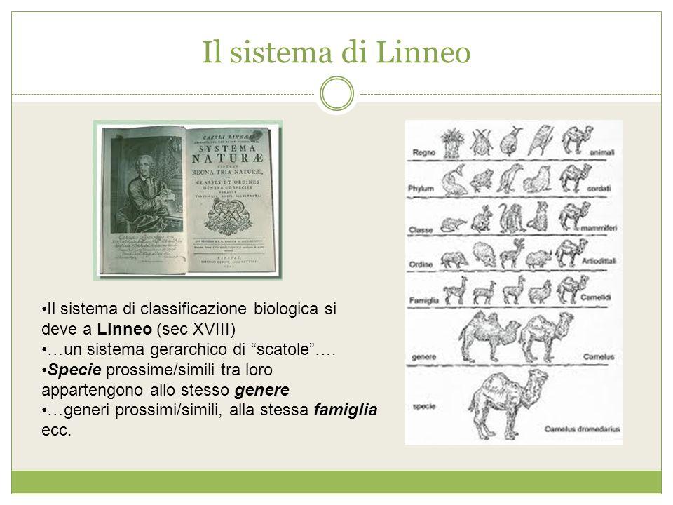 Il sistema di Linneo Il sistema di classificazione biologica si deve a Linneo (sec XVIII) …un sistema gerarchico di scatole…. Specie prossime/simili t