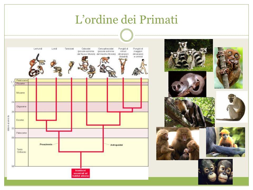 Lordine dei Primati