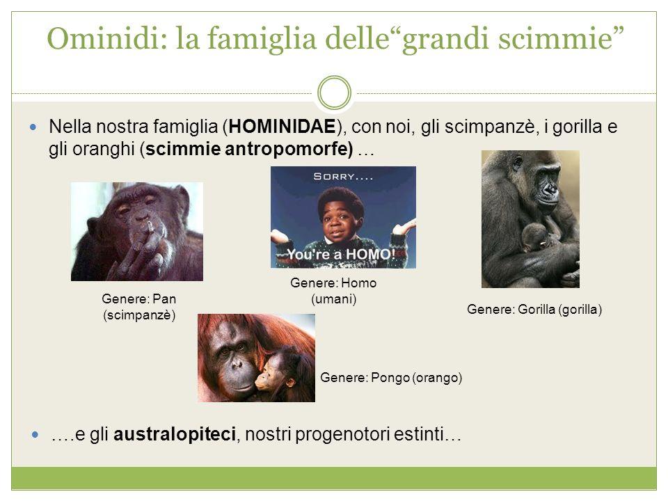 Ominidi: la famiglia dellegrandi scimmie Nella nostra famiglia (HOMINIDAE), con noi, gli scimpanzè, i gorilla e gli oranghi (scimmie antropomorfe) … G