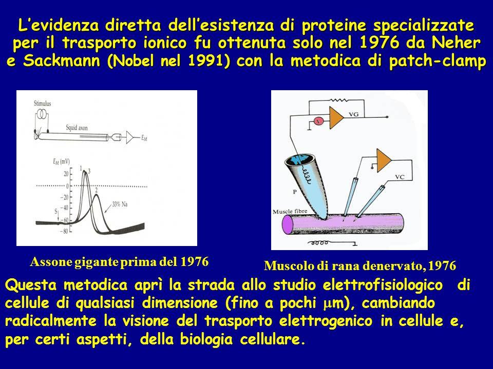 Levidenza diretta dellesistenza di proteine specializzate per il trasporto ionico fu ottenuta solo nel 1976 da Neher e Sackmann (Nobel nel 1991) con l