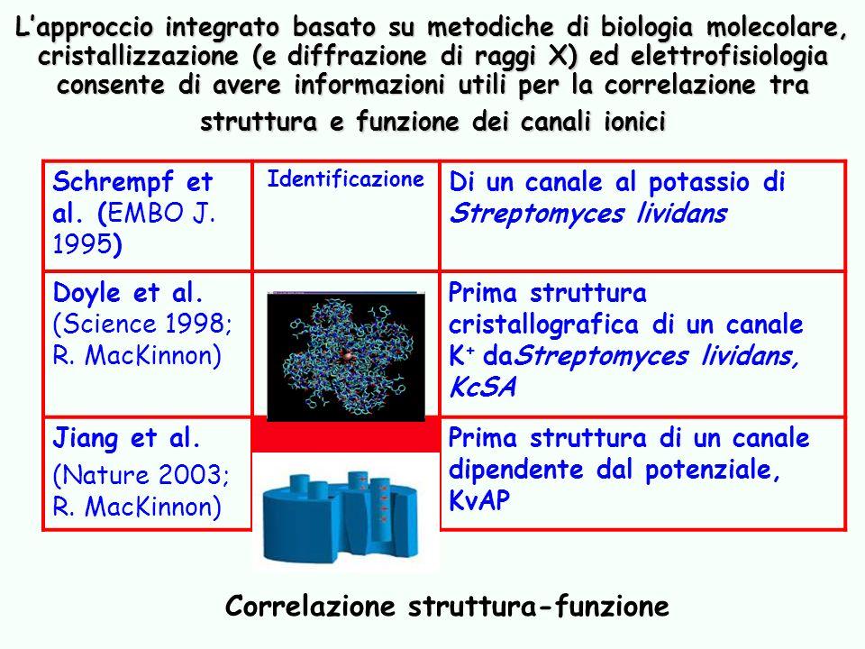 Lapproccio integrato basato su metodiche di biologia molecolare, cristallizzazione (e diffrazione di raggi X) ed elettrofisiologia consente di avere i