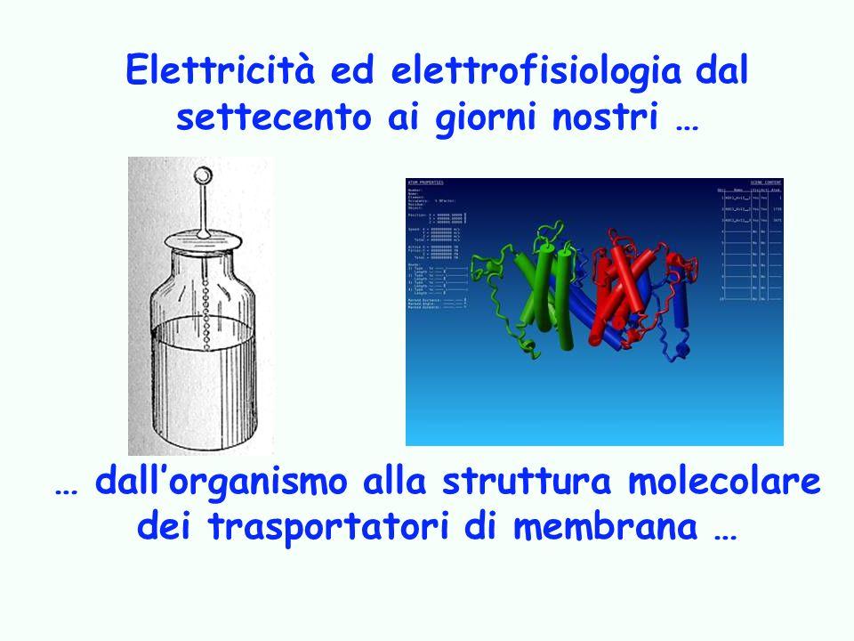 Elettricità ed elettrofisiologia dal settecento ai giorni nostri … … dallorganismo alla struttura molecolare dei trasportatori di membrana …