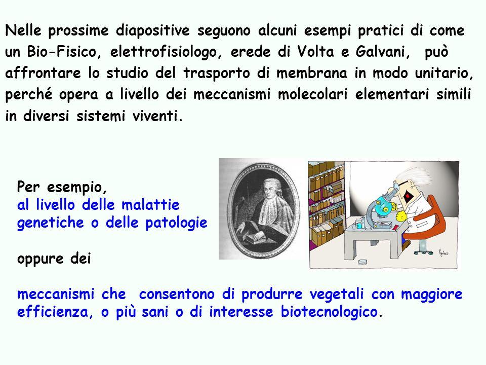 Nelle prossime diapositive seguono alcuni esempi pratici di come un Bio-Fisico, elettrofisiologo, erede di Volta e Galvani, può affrontare lo studio d
