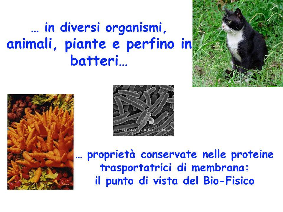 … in diversi organismi, animali, piante e perfino in batteri… … proprietà conservate nelle proteine trasportatrici di membrana: il punto di vista del