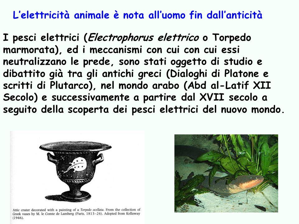 I pesci elettrici (Electrophorus elettrico o Torpedo marmorata), ed i meccanismi con cui con cui essi neutralizzano le prede, sono stati oggetto di st