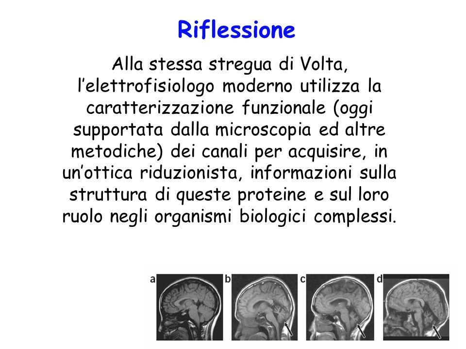 Riflessione Alla stessa stregua di Volta, lelettrofisiologo moderno utilizza la caratterizzazione funzionale (oggi supportata dalla microscopia ed alt