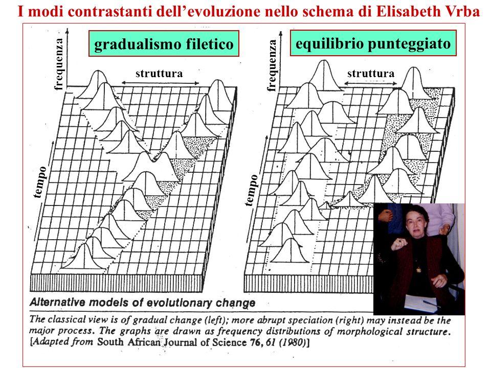 I modi contrastanti dellevoluzione nello schema di Elisabeth Vrba gradualismo filetico equilibrio punteggiato struttura tempo frequenza tempo