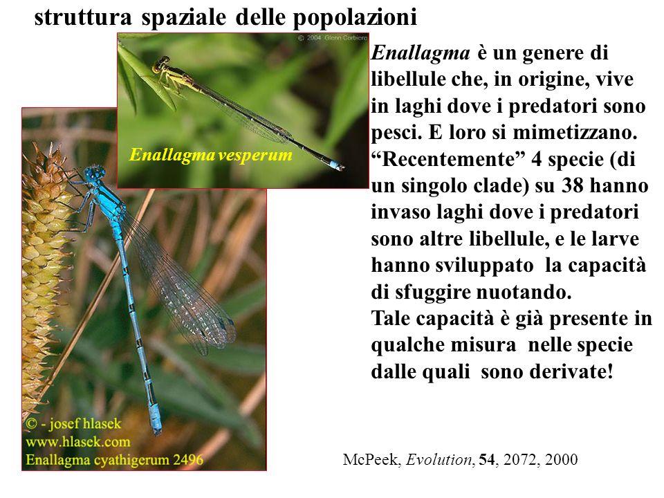 McPeek, Evolution, 54, 2072, 2000 Enallagma è un genere di libellule che, in origine, vive in laghi dove i predatori sono pesci. E loro si mimetizzano