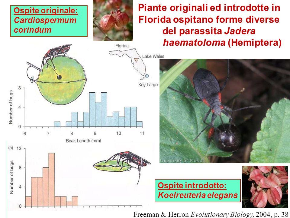 Ospite originale: Cardiospermum corindum Freeman & Herron Evolutionary Biology, 2004, p. 38 Ospite introdotto: Koelreuteria elegans Piante originali e