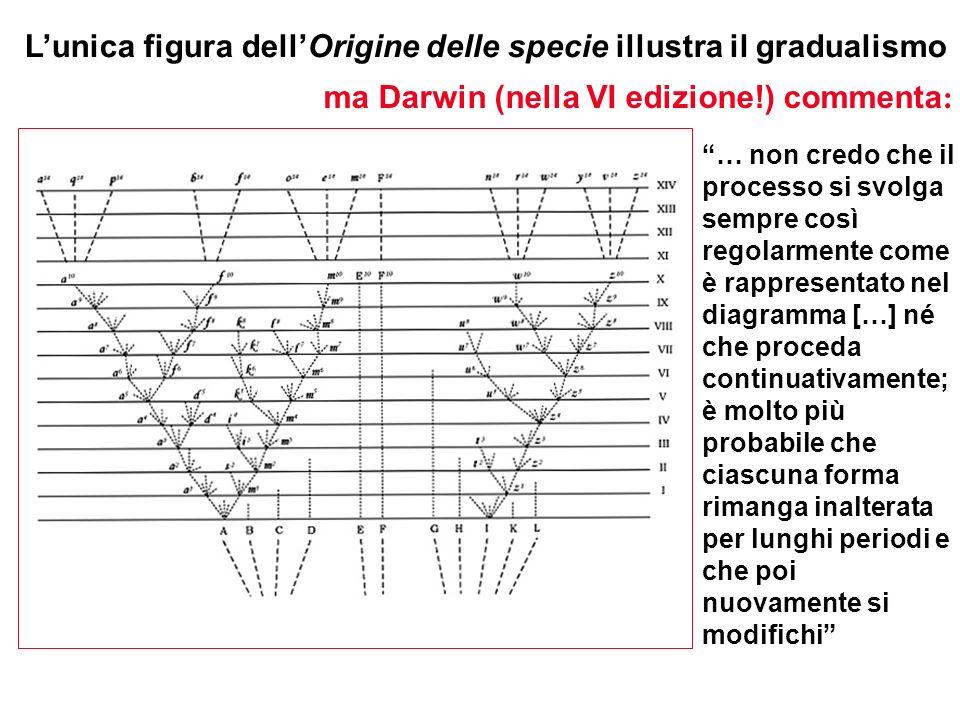 Lunica figura dellOrigine delle specie illustra il gradualismo … non credo che il processo si svolga sempre così regolarmente come è rappresentato nel
