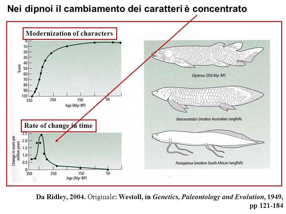 Rate of change in time Modernization of characters Nei dipnoi il cambiamento dei caratteri è concentrato Da Ridley, 2004. Originale: Westoll, in Genet
