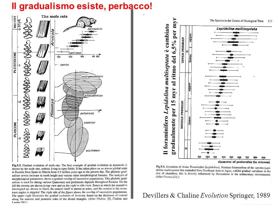 Il gradualismo esiste, perbacco! Devillers & Chaline Evolution Springer, 1989 Il foraminifero Lepidolina multiseptata è cambiato gradualmente per 15 m