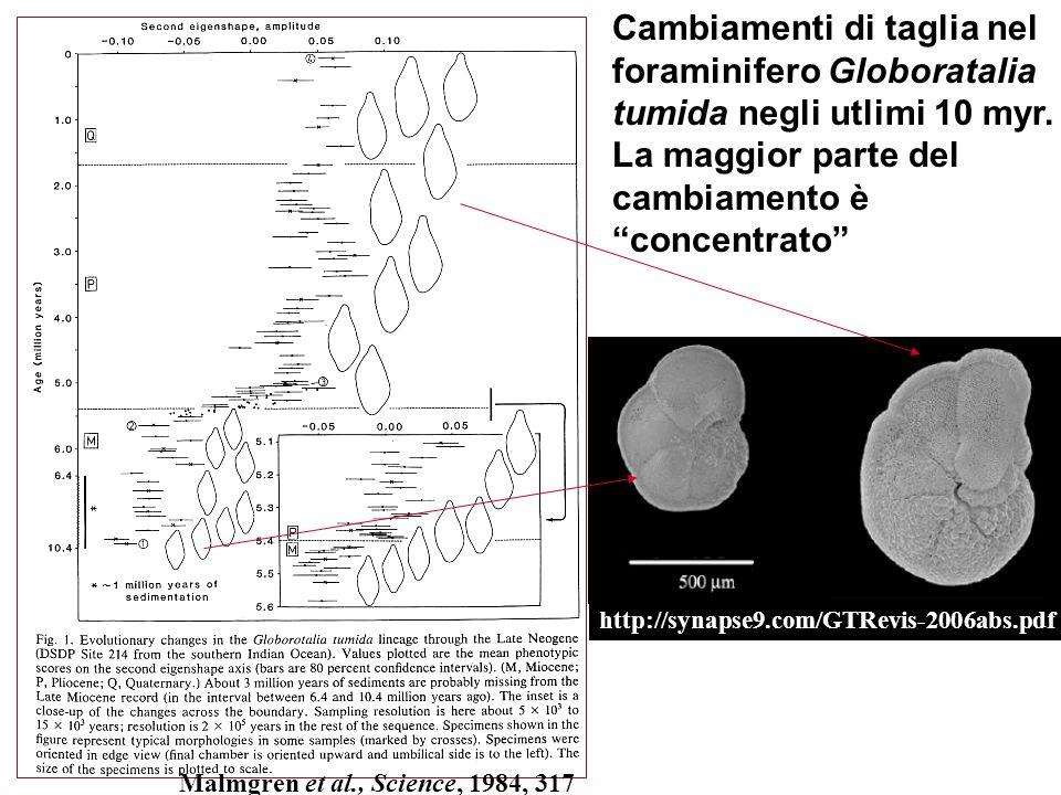 Cambiamenti di taglia nel foraminifero Globoratalia tumida negli utlimi 10 myr. La maggior parte del cambiamento è concentrato http://synapse9.com/GTR