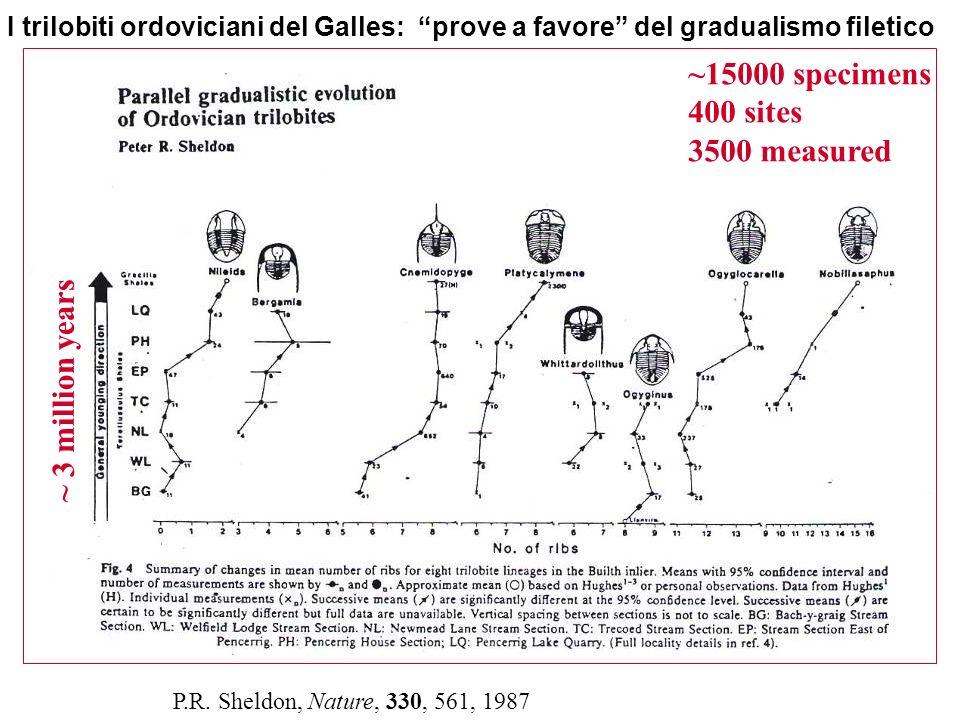 I trilobiti ordoviciani del Galles: prove a favore del gradualismo filetico P.R. Sheldon, Nature, 330, 561, 1987 ~15000 specimens 400 sites 3500 measu
