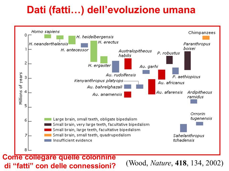 Dati (fatti…) dellevoluzione umana (Wood, Nature, 418, 134, 2002) Come collegare quelle colonnine di fatti con delle connessioni?