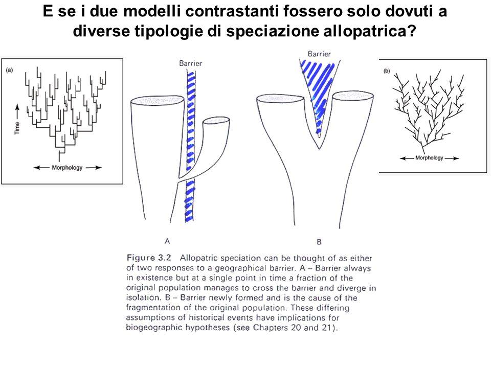 E se i due modelli contrastanti fossero solo dovuti a diverse tipologie di speciazione allopatrica?