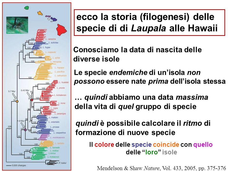ecco la storia (filogenesi) delle specie di di Laupala alle Hawaii Conosciamo la data di nascita delle diverse isole … quindi abbiamo una data massima