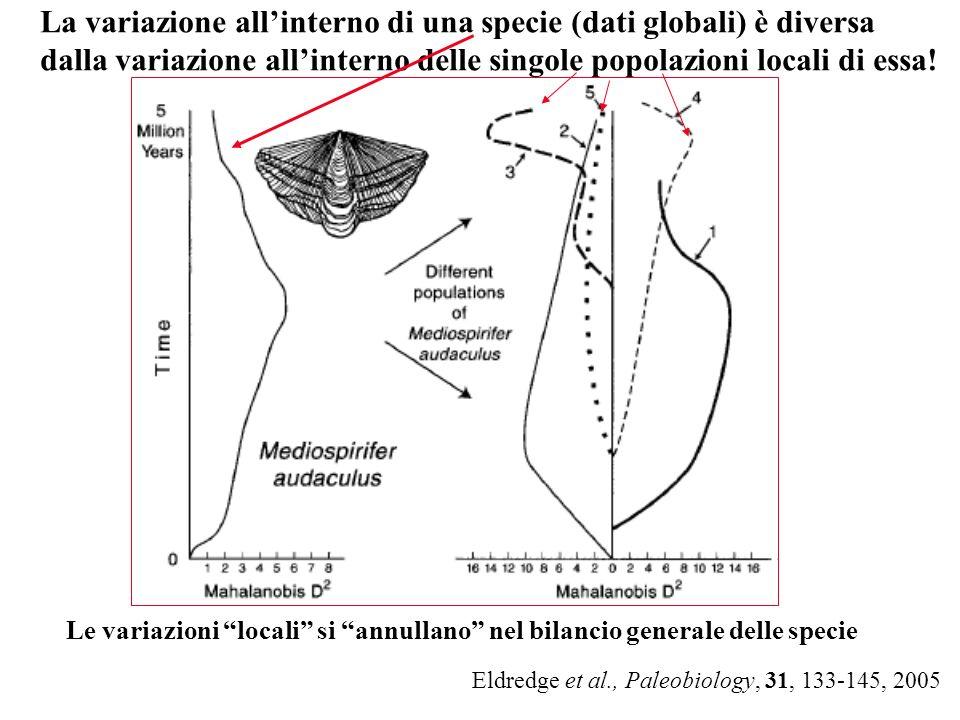 Eldredge et al., Paleobiology, 31, 133-145, 2005 La variazione allinterno di una specie (dati globali) è diversa dalla variazione allinterno delle sin