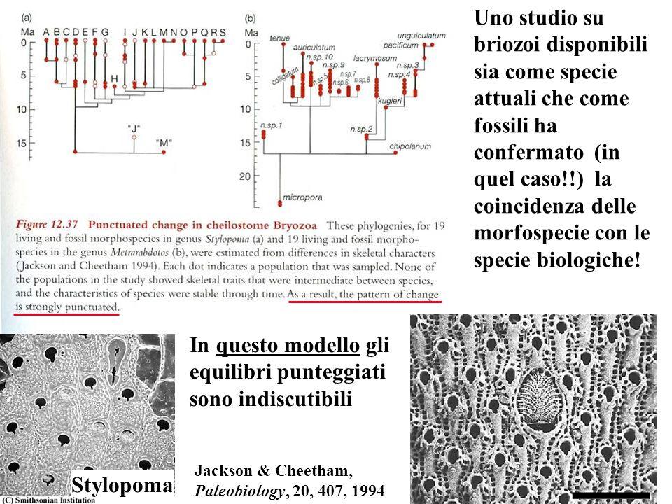Uno studio su briozoi disponibili sia come specie attuali che come fossili ha confermato (in quel caso!!) la coincidenza delle morfospecie con le spec